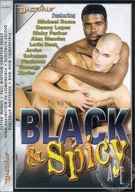 Black & Spicy Porn Video