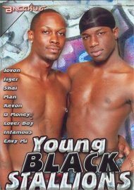 Young Black Stallions image
