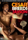 Cesar Breeds Jayson Boxcover