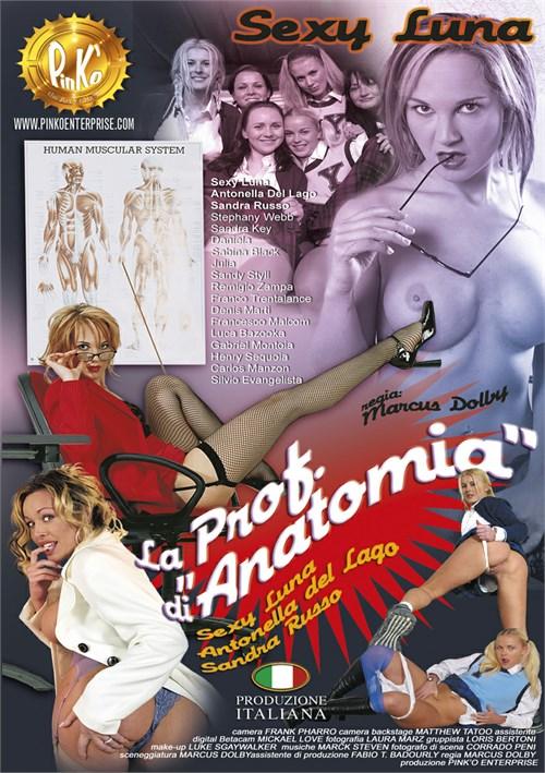 Anatómia Gay Sex