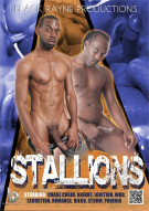 Stallions Boxcover